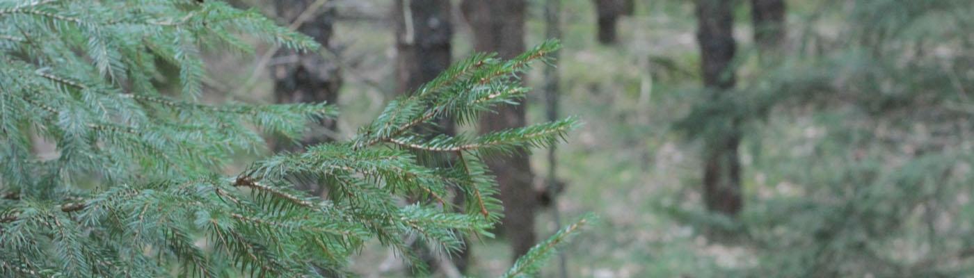 ein Zweig im Wald
